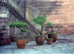 Voyages : Asie bonsai chinois 2