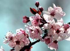 Nature Pluie et prunus