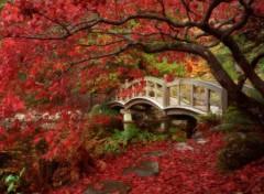 Trips : Asia Japon