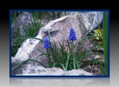 Nature fleur bleus