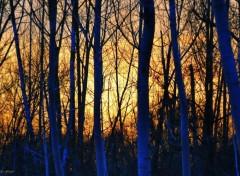 Nature Blue Trees