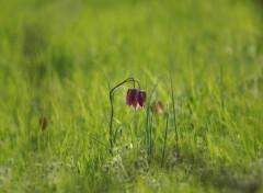 Nature Fée Clochette