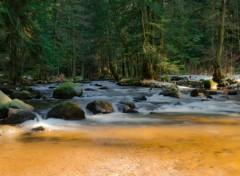 Nature Paysage ruisseau Vosgien
