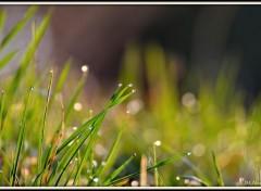 Nature Fraîcheur matinale