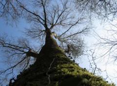 Nature Arborescence