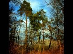 Nature Les derniers rayons du soleil brille. 2.