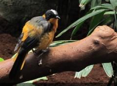 Animaux oiseau (zoo de Barcelone)