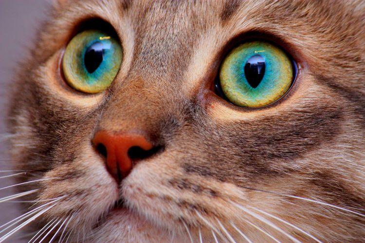 Fonds d'écran Animaux Chats - Chatons Eyes cat!!!
