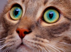 Animaux Eyes cat!!!