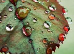 Nature Jour de pluie..