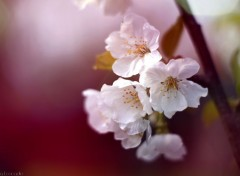 Nature Springtime