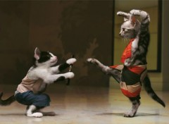 Humour Kung Fu Cats