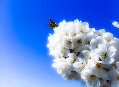 Nature printemps