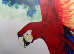Art - Peinture Ara