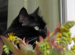 Animals Voir sans être vu - See unnoticed