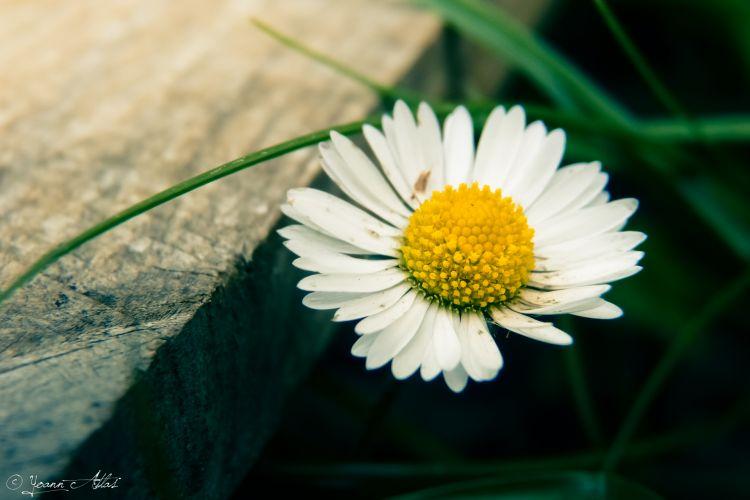 Fonds d'écran Nature Fleurs Underground