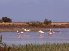Animals Flamands en Camargue...