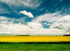 Nature Sun & Field