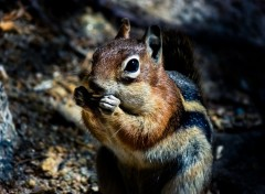 Animaux Squirrel