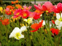 Nature Fleurs de Lyon!