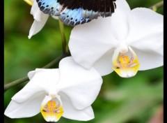 Animaux Papillon