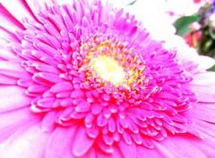 Nature belle fleur