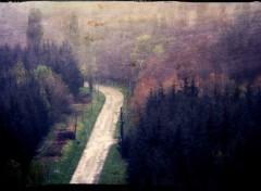 Nature la sombre route