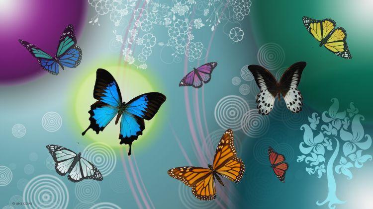 Fonds D Ecran Animaux Fonds D Ecran Insectes Papillons Papillons Par Antigone59 Hebus Com