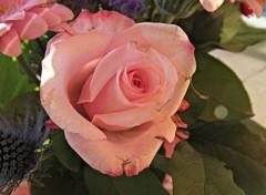 Nature rose au ton pastel
