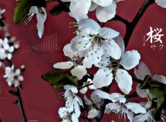 Nature Prunier en fleurs