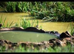 Animals petit oiseau a soif !!!