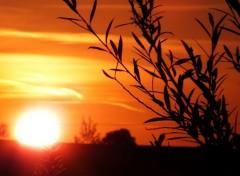 Nature Crépuscule