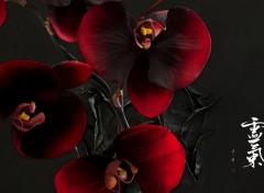 Art - Numérique Orchidées pourpre