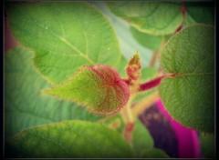 Nature Mon bebe kiwi