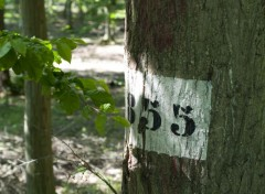 Nature Arbres - Forêt
