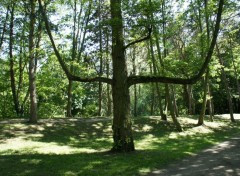 Nature l'arbre magique sur les  bords de l'yerres 91    (photo prise le 25 mai 2012)