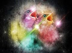 Art - Numérique oiseaux