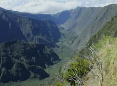 Nature Plaine des Cafres 974