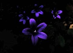 Nature fleurs bleues