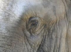 Animals Eléphant'oeil ...
