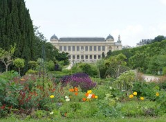 Nature Le jardin des plantes   (Paris)   photo prise le 8-6-2012