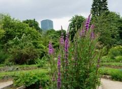 Nature  Jardin des plantes (Paris)  Massif de fleurs,  photos prise le 9-06-2012