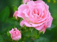 Nature rose du printemps