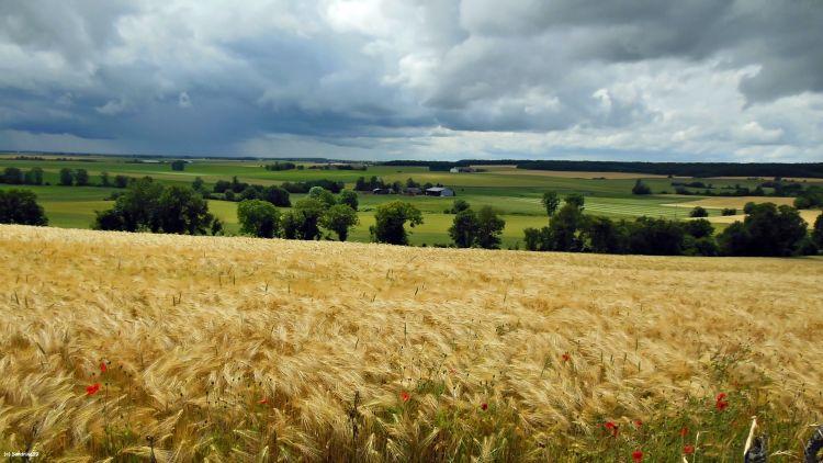 Fonds d'écran Nature Champs - Prairies Paysage de Campagne Berrichonne