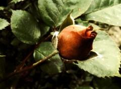 Nature Délicate rose