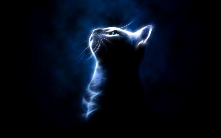 Wallpapers Digital Art Animals Cat in the light