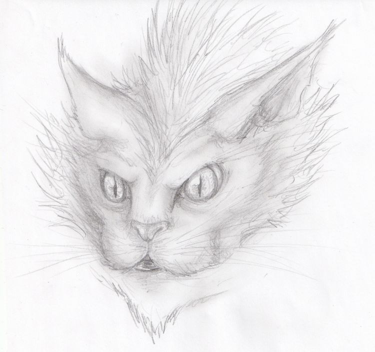 Fonds d'écran Art - Crayon Animaux - Chats Dessins