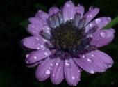 Nature fleur ultraviolet