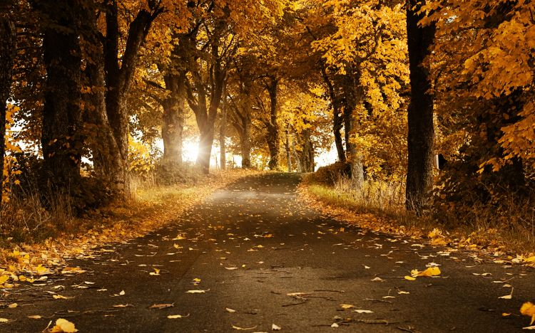 Wallpapers Nature Trees - Forests route d'automne
