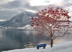 Nature Arbre rouge Banc bleu